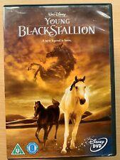 The Young Black Stallion DVD 2003 Walt Disney Live Action Horse Equestrian Drama