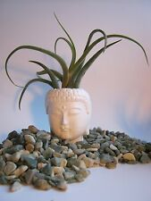 Buddha Head Planter, Small White Pot For Succulants And Air Plants, Zen Decor