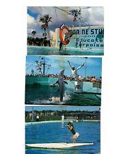 St Augustine Marineland Florida Porpoises Dog Surfboard Lot of 3 Postcard Fl7