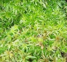 Sphagnum Moos lebend 1000 g zur Orchideenzucht und für Terrarien