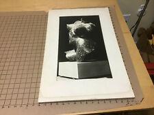 Large Photo on board -- TORSO