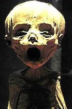 Stampa incorniciata-Freaky MUMMIFICATO ALIEN BABY'S rimane (PICTURE Mummia UFO ART)