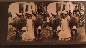IRLANDE. Photographie D'une Petite Fille Irlandaise Avec Ses Amis Ânes. 1903.