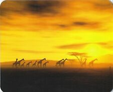 Mouse Pad Edition Colibri: Sunrise in the Serengeti With Giraffes, Africa