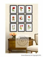 Memorial Day Poppies Decor set of 9 Red Floral Botanical Illustration Wall Art