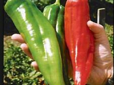 CHILLI SEEDS BIG JIM ( 25 SEEDS )