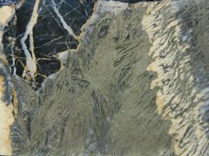 RimRock: Rare FEATHER PYRITE Rough Slab