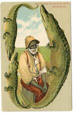 Alligator Border Florida 642 Black Americana Old Uncle Joe