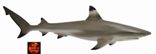 BLACKTIP REEF SHARK - Sealife Toy Model by CollectA 88726 *New with Tag*