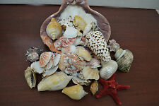 50+ PCS ASSORT MIX SEA SHELLS LION PAW BEACH DECOR CRAFT WEDDING NAUTICAL