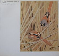 BEAUTIFUL VINTAGE BIRD PRINT ~ BEARDED TIT MALE & FEMALE ~ TUNNICLIFFE