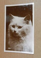 "Postcard Animals Cat ""pussy"" RPPC posted 1927 xc4"