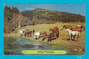 Greetings from Lander, Wyoming  - Herd of horses near water