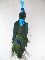 Natural Peacock Bird Ornament 8 Inch per PAIR (2)