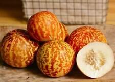 TIgger Melon Seeds - Heirloom  - Cucumis Melo Reticulatus