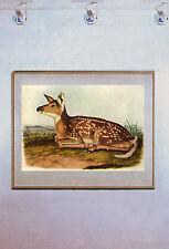 John James Audubon White-Tailed Deer 15x 22 Art Print Numbered Ltd. Edition