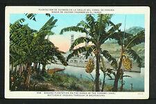 PANAMÁ 07-PANAMÁ -Plantación de Guineos en la orilla del Canal de Panamá