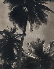1930's Vintage CEYLON Sri Lanka TROPICAL LANDSCAPE Photograph Art ~ LIONEL WENDT