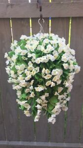 Beautiful Artificial  Morning Glory Ivory Hanging Basket Ready To Hang