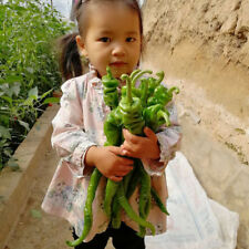 20pcs Giant Green Screw Pepper F1 Hybrid vegetable Seeds