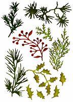 Sizzix Thinlits Mini Holiday Greens 11-PK #661597 MSRP $14.99  by Tim Holtz