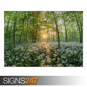 FOREST IN THE SPRING (AE003) NATURE POSTER - Photo Poster Print Art * All Sizes