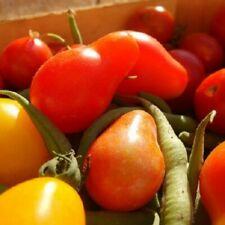50 Graines de Tomate Cerise Poire Rouge et Jaune Méthode BIO seed  légume ancien