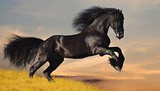 Leinwand Bild Motiv Alexia Khruscheva Haus Pferd Foto Schwarz 40x70x1,2 cm A6MB