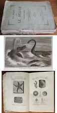 livre LA TERRE AVANT LE DÉLUGE Hachette 1863 illustrations de  RIOU préhistoire