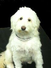 "Medium Purple Collar With Clear Crystal Rhinestone Dog Collar Fits 12-16"" Necks"