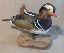 Mandarin Duck Drake Professional Taxidermy On Wood