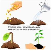 20 teile / paket Ahorn Samen Bonsai Acer Baum Samen Garten Seltene Farbe CHPH