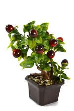 Obst-Pflanzen, Bäume & Sträucher