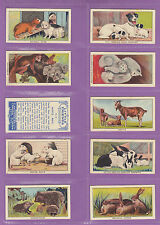 Birds Collectable Trade Cards In Plastic Sleeves