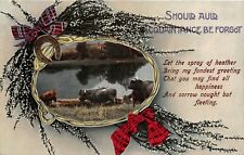 POSTCARD  GREETINGS  HIGHLAND CATTLE  AULD ACQUAINTANCE