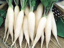 White Radish Seeds, White Icicle, Bulk Radish Seed, Non-Gmo Heirloom Seed, 500ct