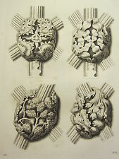 1795 PRINT GOTHIC ORNAMENT YORK MINSTER ~ FOUR KNOTS CEILING NAVE OF THE CHURCH