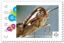 cp. BUTTERFLY = Close up = Picture Postage stamp MNH Canada 2018 [p18-06sn24]