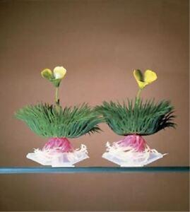 Aqua Plant Flowering Grass Aquarium Plant Ornament - P27B - Penn Plax