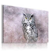 PAINTING DRAWING BIRDS OWL ANIMALS PRINT Canvas Wall Art R149 MATAGA