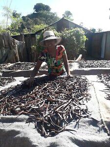 10 gousses Vanille Bourbon gourmet 15 cm Madagascar 2020 direct productrice