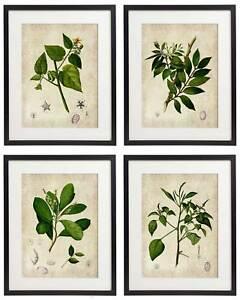 Vintage Botanical Floral No. 02 Art Home Wall Art Print Set of 4 Prints UNFRAMED
