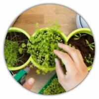 Kräuterpaket - 6 Kräuter (350 Samen) – Ideal für die Fensterbank