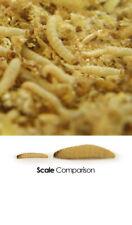 Mini waxworms ( approximately 300 per tub  )
