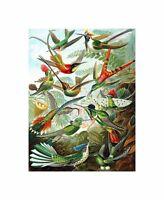 Colour Plate Ernst Haeckel Kunstformen Natur Hummingbirds Canvas Print
