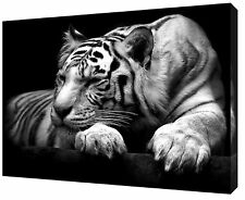Big Tiger Photo/Picture Print On Framed Canvas Wall Art Home/office Decoration