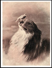ROUGH COLLIE DOG WITH A CANARY ON HIS NOSE LOVELY VINTAGE STYLE DOG PRINT POSTER