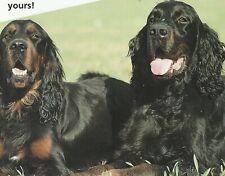 GORDON SETTER - Information Sheets - World of Dogs **VERY GOOD COPY**