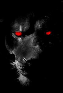 Framed Print - Black Lion with Red Eyes (Animal Picture Panther Tiger Big Cat)