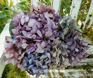 10 Dried Hydrangea Flowers Dark Pink, Lavender Primitive DIY Craft Farmhouse